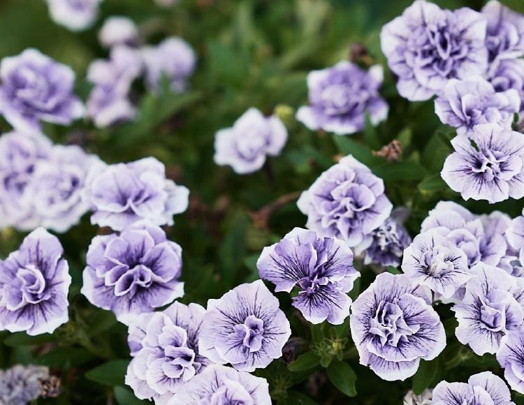 Greens 花のイメージ